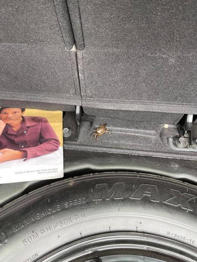 Mua cua về ăn, chủ xe hơi tái mặt khi nhìn hình ảnh cả đội bò lồm ngồm, ẩn náu trong xe - Ảnh 4.
