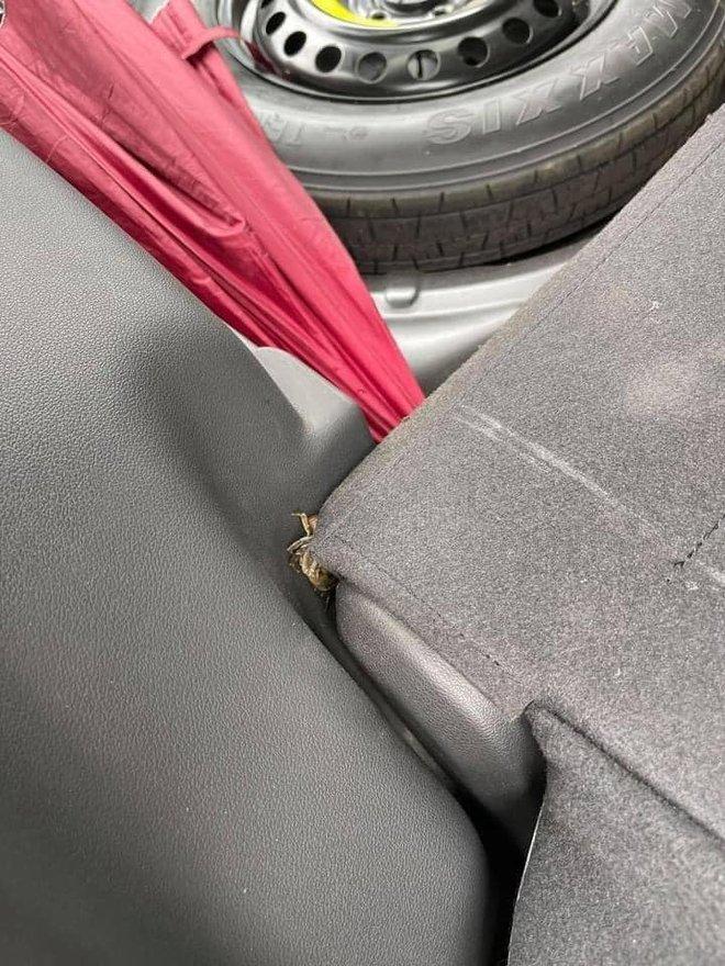 Mua cua về ăn, chủ xe hơi tái mặt khi nhìn hình ảnh cả đội bò lồm ngồm, ẩn náu trong xe - Ảnh 5.