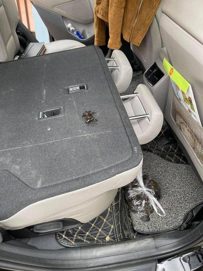 Mua cua về ăn, chủ xe hơi tái mặt khi nhìn hình ảnh cả đội bò lồm ngồm, ẩn náu trong xe - Ảnh 6.