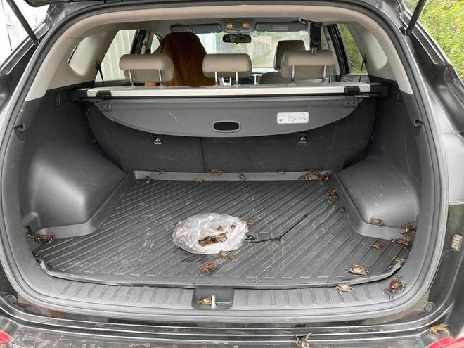 Mua cua về ăn, chủ xe hơi tái mặt khi nhìn hình ảnh cả đội bò lồm ngồm, ẩn náu trong xe - Ảnh 1.