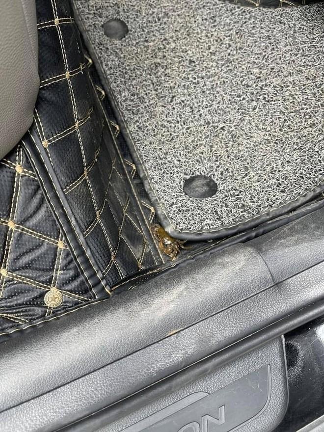 Mua cua về ăn, chủ xe hơi tái mặt khi nhìn hình ảnh cả đội bò lồm ngồm, ẩn náu trong xe - Ảnh 2.