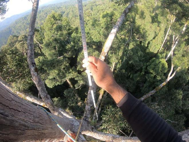 Phát hiện cây nhiệt đới cao nhất thế giới ở Malaysia, nặng gấp đôi chiếc Boeing 737-800 - Ảnh 2.