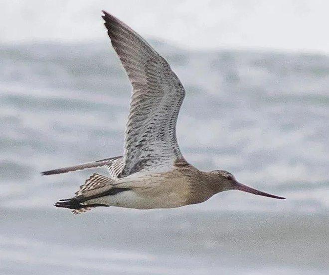 Con vật nặng chưa tới 1 gram có thể bay liên tục 6400km, băng qua cả Ấn Độ Dương: Tuổi thơ ai cũng biết tới! - Ảnh 1.