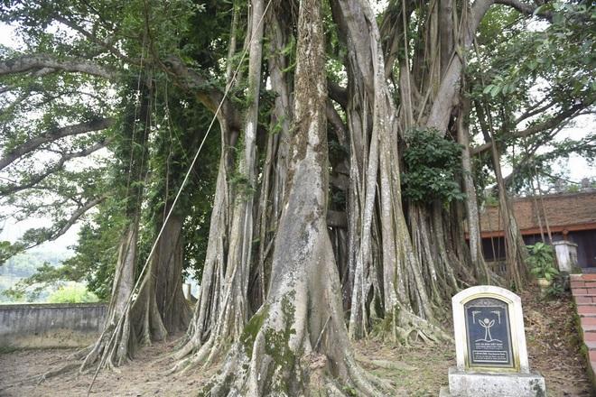 Chiêm ngưỡng báu vật xanh bên đền cổ thờ Tản Viên Sơn Thánh - Ảnh 3.