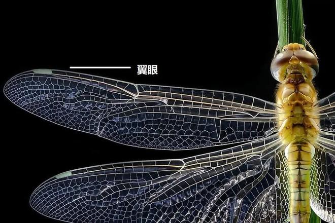 Con vật nặng chưa tới 1 gram có thể bay liên tục 6400km, băng qua cả Ấn Độ Dương: Tuổi thơ ai cũng biết tới! - Ảnh 7.