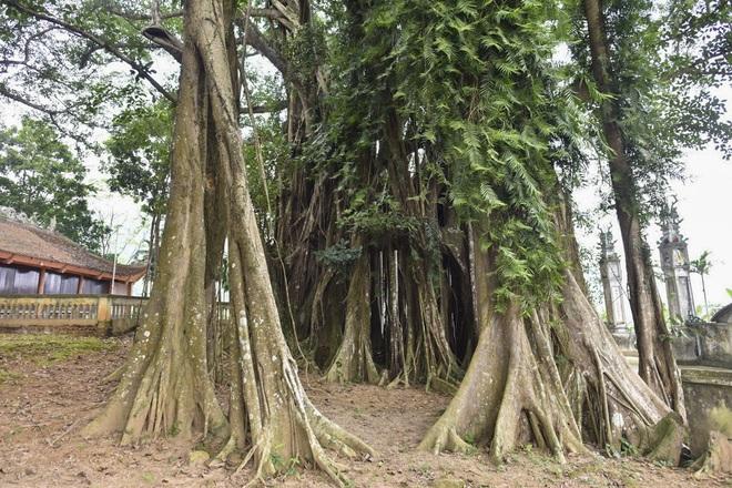 Chiêm ngưỡng báu vật xanh bên đền cổ thờ Tản Viên Sơn Thánh - Ảnh 7.
