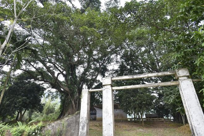 Chiêm ngưỡng báu vật xanh bên đền cổ thờ Tản Viên Sơn Thánh - Ảnh 8.