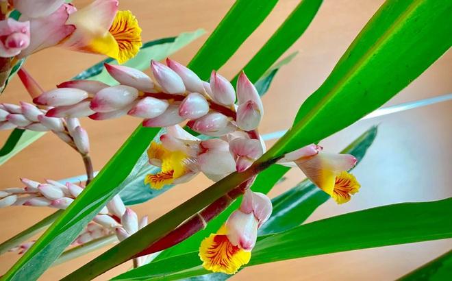 """Hoa rừng đẹp như bông lúa mẩy hạt gây """"sốt"""", bán chơi mà được cả nghìn cành"""