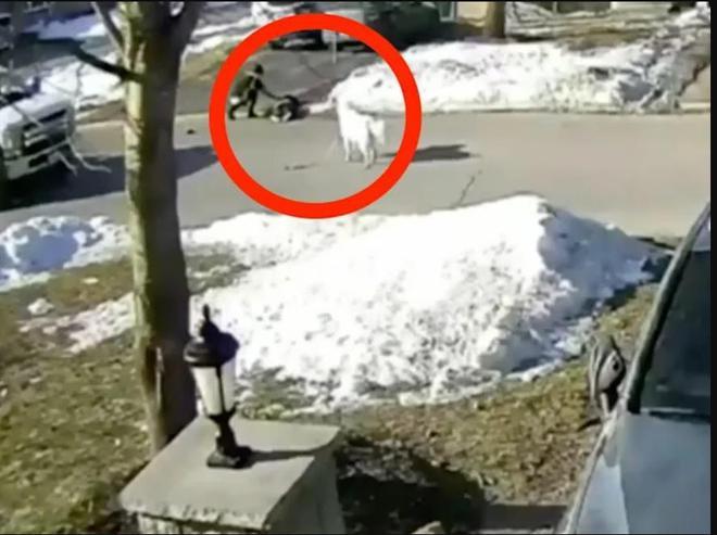 Chú chó bất ngờ chặn đường xe tải, những gì diễn ra sau đó gây kinh ngạc