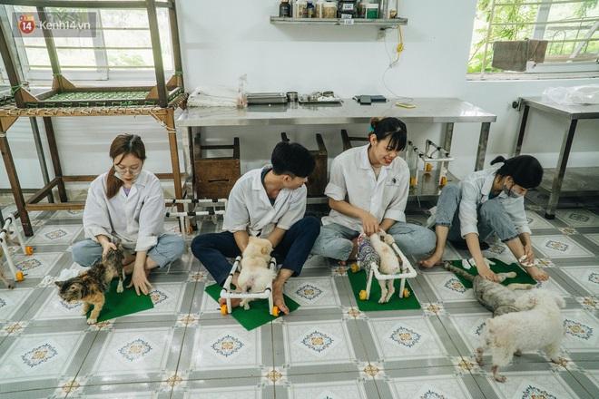 Bên trong phòng khám chữa bệnh, châm cứu miễn phí cho chó mèo ở Hà Nội: Ngoan, bà thương... - Ảnh 2.