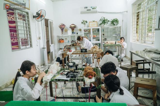 Bên trong phòng khám chữa bệnh, châm cứu miễn phí cho chó mèo ở Hà Nội: Ngoan, bà thương... - Ảnh 17.