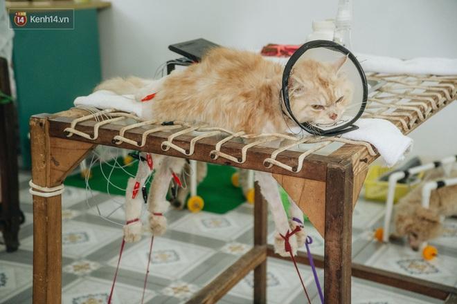 Bên trong phòng khám chữa bệnh, châm cứu miễn phí cho chó mèo ở Hà Nội: Ngoan, bà thương... - Ảnh 18.