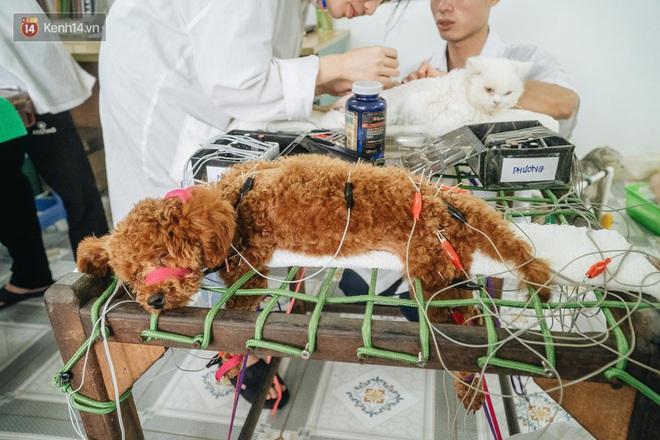 Bên trong phòng khám chữa bệnh, châm cứu miễn phí cho chó mèo ở Hà Nội: Ngoan, bà thương... - Ảnh 23.
