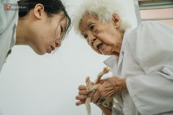 Bên trong phòng khám chữa bệnh, châm cứu miễn phí cho chó mèo ở Hà Nội: Ngoan, bà thương... - Ảnh 26.