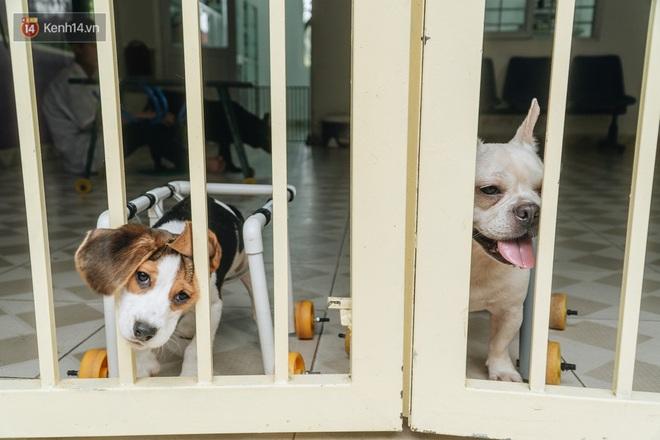 Bên trong phòng khám chữa bệnh, châm cứu miễn phí cho chó mèo ở Hà Nội: Ngoan, bà thương... - Ảnh 31.