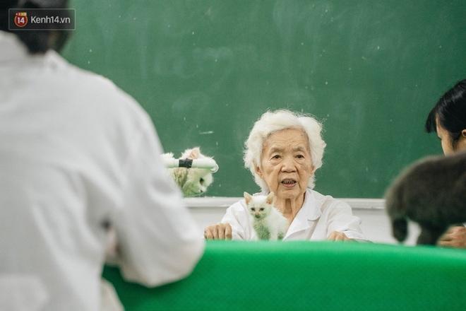 Bên trong phòng khám chữa bệnh, châm cứu miễn phí cho chó mèo ở Hà Nội: Ngoan, bà thương... - Ảnh 5.