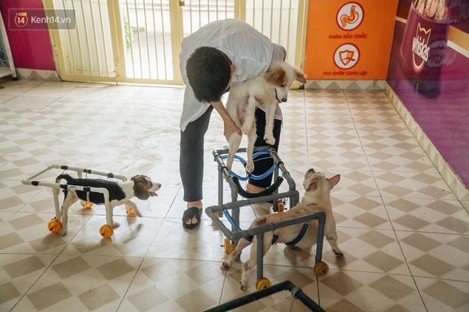Bên trong phòng khám chữa bệnh, châm cứu miễn phí cho chó mèo ở Hà Nội: Ngoan, bà thương... - Ảnh 11.