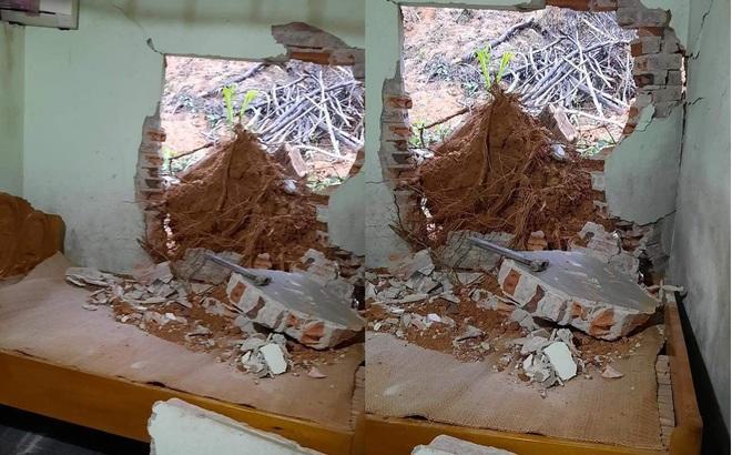 Mưa lớn trôi gốc cây làm sập tường, đè trúng người đàn ông đang ngủ trong giường