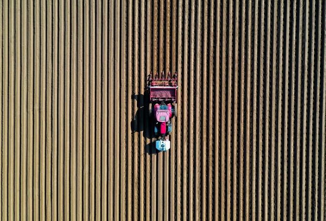24h qua ảnh: Nông dân cày đất trên cánh đồng khoai tây ở Pháp - Ảnh 3.