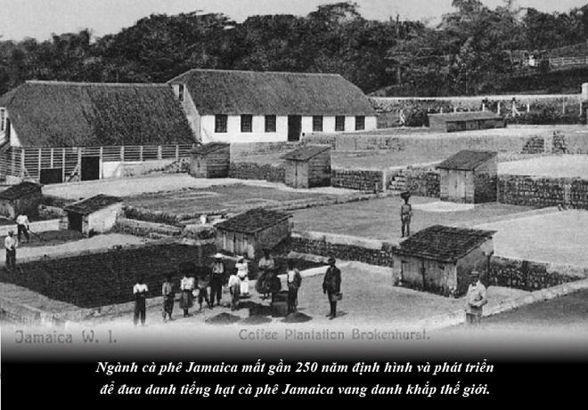 Jamaica – sự quyến rũ của vùng nguyên liệu cà phê nơi cao nhất thế giới - Ảnh 2.