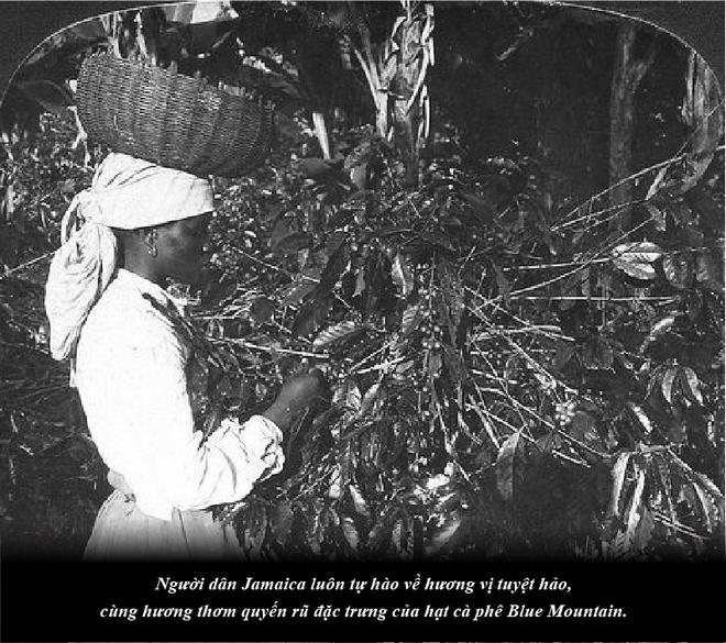Jamaica – sự quyến rũ của vùng nguyên liệu cà phê nơi cao nhất thế giới - Ảnh 3.