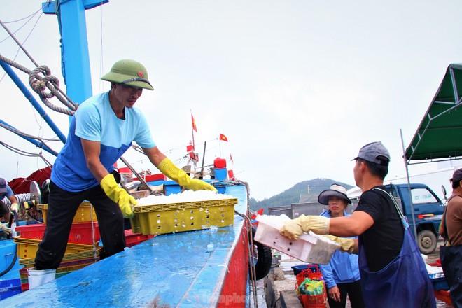 Ngư dân Nghệ An thu hàng trăm triệu mỗi chuyến từ mực luộc tươi trên tàu - Ảnh 9.