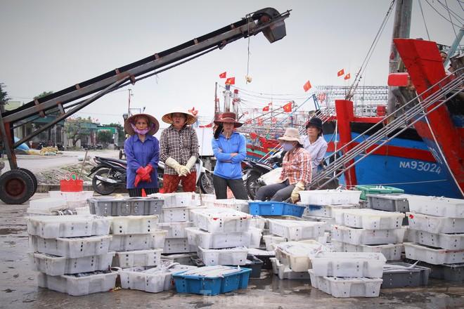 Ngư dân Nghệ An thu hàng trăm triệu mỗi chuyến từ mực luộc tươi trên tàu - Ảnh 11.