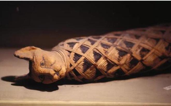 Xác ướp mèo - sự cuồng tín của người Ai Cập cổ đại?