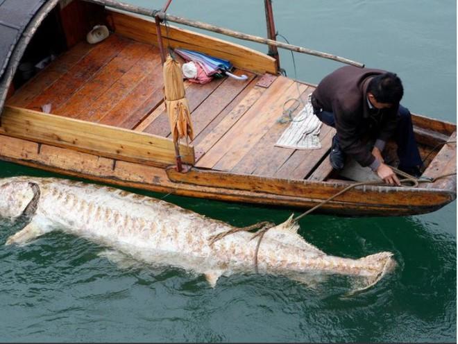 Chuyên gia TQ thừa nhận đập Tam Hiệp làm thay đổi sông Dương Tử - Ảnh 1.