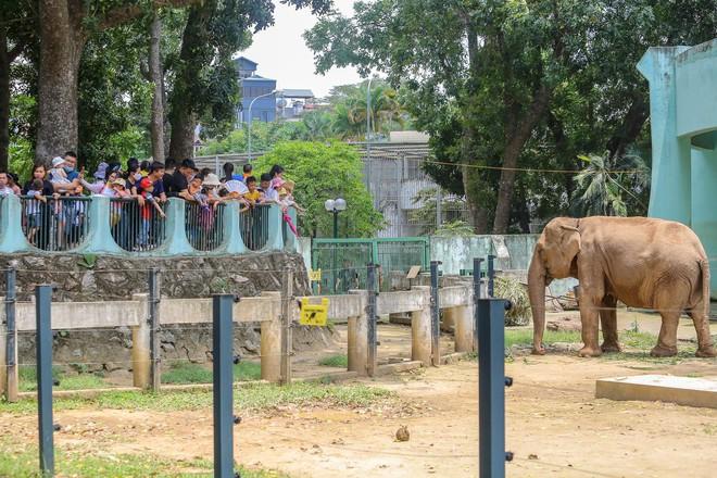 Chen chân ở vườn thú Hà Nội ngày nghỉ lễ Giỗ Tổ - Ảnh 11.