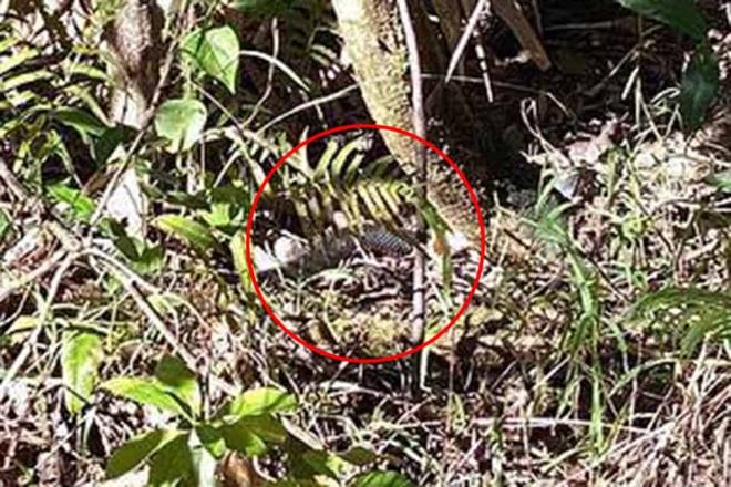 Nhìn vào bụi cây này, bạn có tìm ra con rắn cực độc có thể đoạt mạng người? - Ảnh 2.