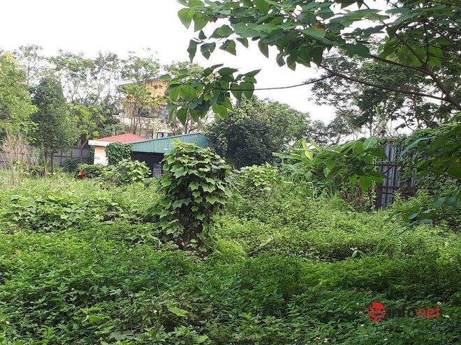 Sắp hết gia hạn, dự án ôm đất vàng của Công ty Long Giang vẫn um tùm cỏ giữa Hà Nội, liệu có bị thu hồi? - Ảnh 5.