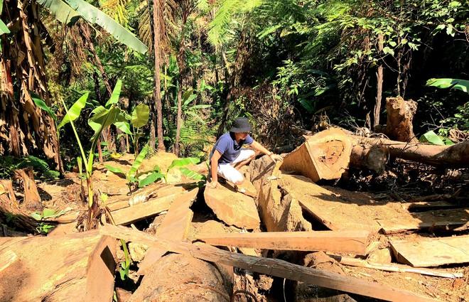 Phá rừng ở Thừa Thiên-Huế: Anh em chúng tôi làm đến xịt khói... - Ảnh 1.
