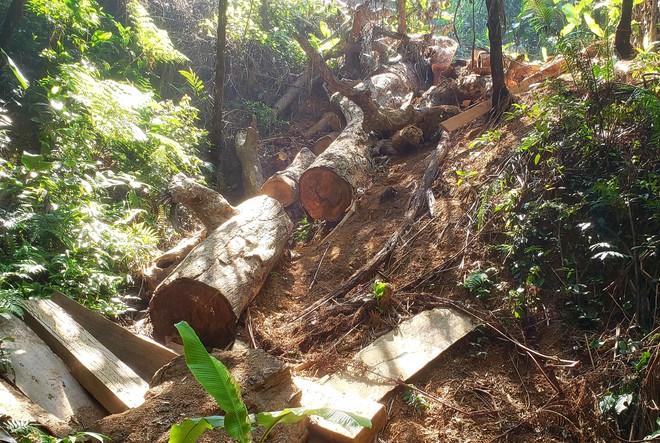 Phá rừng ở Thừa Thiên-Huế: Anh em chúng tôi làm đến xịt khói... - Ảnh 2.
