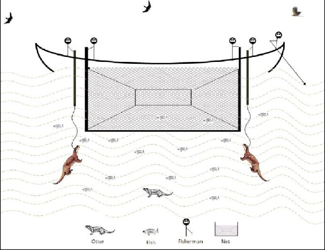 Cả bầy rái cá bị buộc dây thừng như thú cưng và lý do bất ngờ đằng sau
