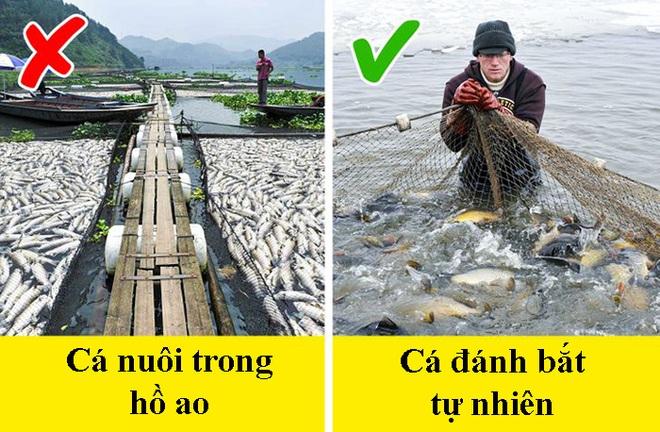 8 dấu hiệu nhận biết chọn mua cá tươi ngon: Cá hồi màu đẹp không hẳn đã tốt 005