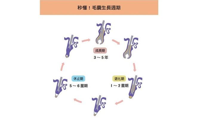 Có cách nào chữa được rụng tóc, hói đầu không? Bác sĩ khuyên nên bắt đầu từ 4 nguyên nhân - Ảnh 1.