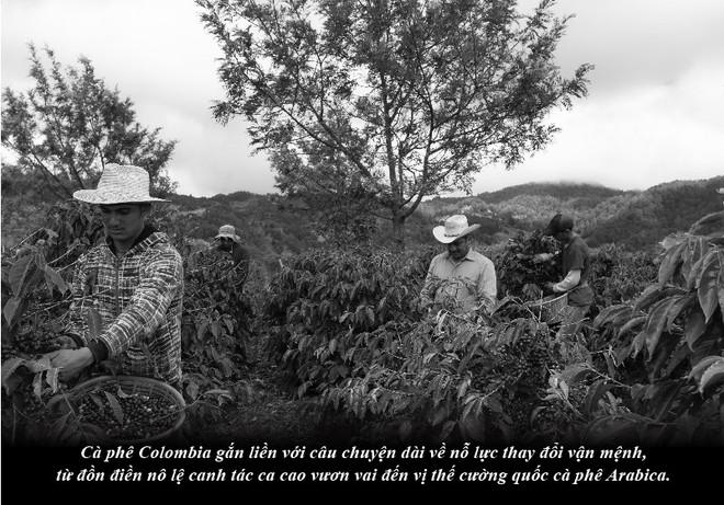 Hành trình khẳng định dấu ấn khác biệt của cà phê Colombia - Ảnh 2.