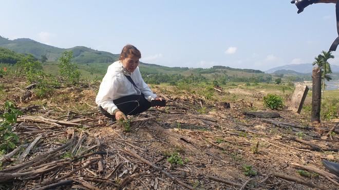 Cây cối bị chặt hạ, đất đai bị san ủi khi đang chờ đền bù để xây thuỷ điện - Ảnh 2.