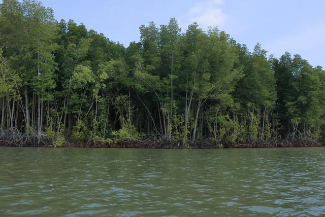 Lá phổi xanh quan trọng nhất của Đông Nam Á Cần Giờ trước mối lo thiếu người giữ rừng - Ảnh 1.