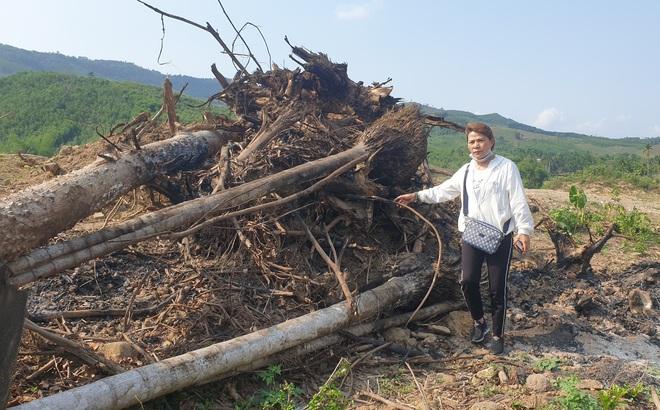 Cây cối bị chặt hạ, đất đai bị san ủi khi đang chờ đền bù để xây thuỷ điện
