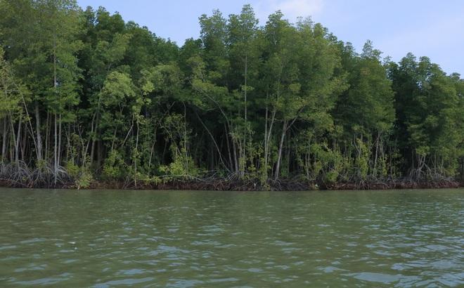 """""""Lá phổi xanh quan trọng nhất của Đông Nam Á"""" Cần Giờ trước mối lo thiếu người giữ rừng"""