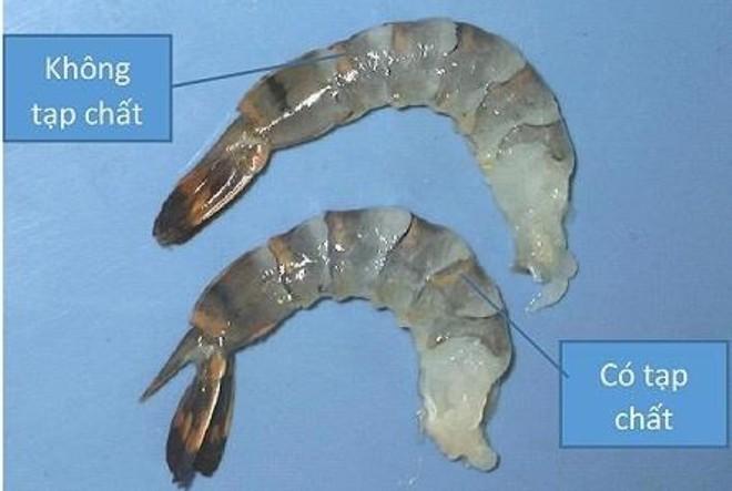 Chuyên gia Nguyễn Duy Thịnh: 10kg tôm có thể bị bơm tới 2kg tạp chất, cách để nhận biết tôm bẩn - Ảnh 10.