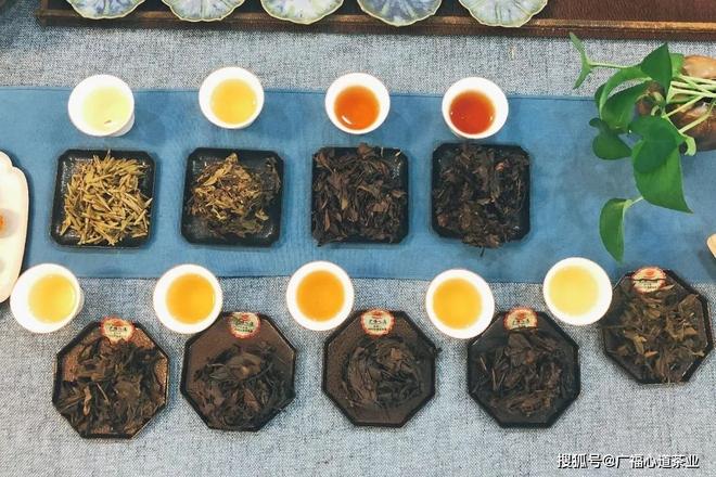 Sau 3000 năm được người đời coi là đồ uống số 1, trà xanh tiếp tục được GS dinh dưỡng ca tụng nhờ tác dụng này - Ảnh 5.