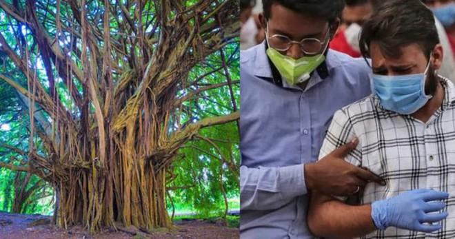 Giữa ranh giới sinh tử, cảnh sát Ấn Độ yêu cầu bệnh nhân Covid-19 ngồi dưới gốc cây để tăng ôxy - Ảnh 1.
