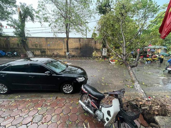 Hà Nội: Hàng loạt cây xanh bật gốc đổ rạp xuống đường sau cơn mưa lớn đầu mùa - Ảnh 9.