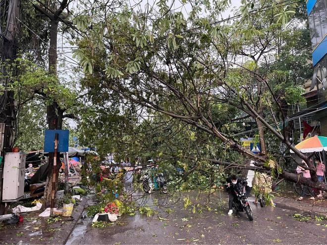 Hà Nội: Hàng loạt cây xanh bật gốc đổ rạp xuống đường sau cơn mưa lớn đầu mùa - Ảnh 3.