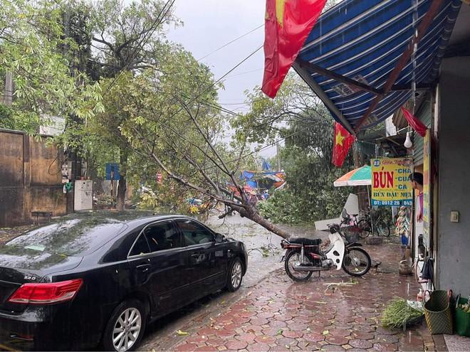 Hà Nội: Hàng loạt cây xanh bật gốc đổ rạp xuống đường sau cơn mưa lớn đầu mùa - Ảnh 7.