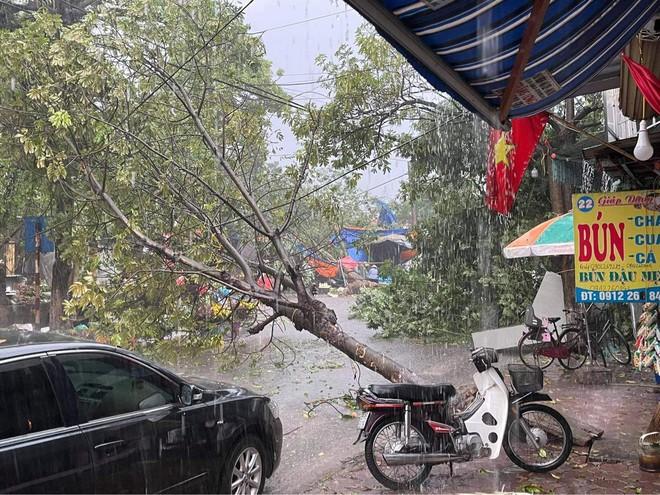 Hà Nội: Hàng loạt cây xanh bật gốc đổ rạp xuống đường sau cơn mưa lớn đầu mùa - Ảnh 1.