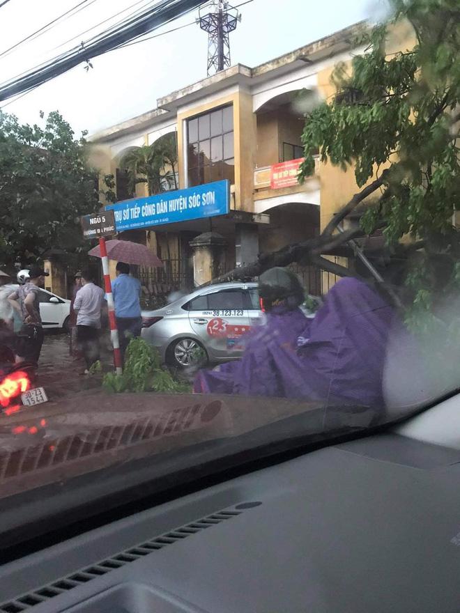 Hà Nội: Hàng loạt cây xanh bật gốc đổ rạp xuống đường sau cơn mưa lớn đầu mùa - Ảnh 5.